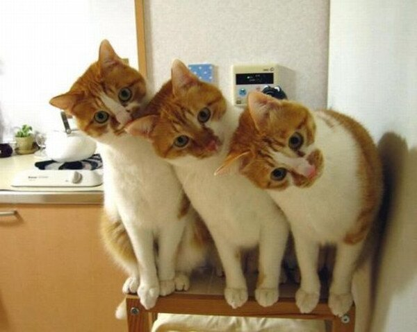 14164983183-funny-cats