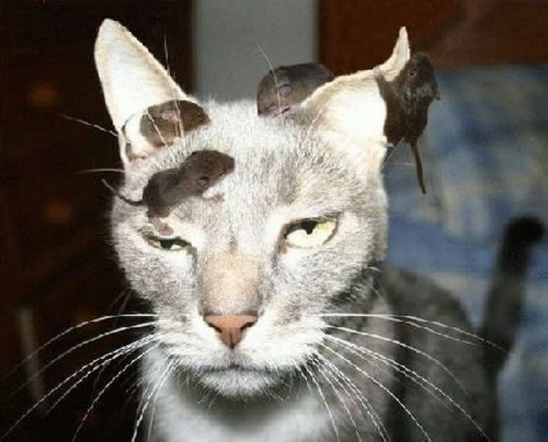 Crazy-but-Funny-Cats-14