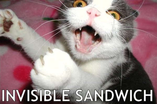 Funny-Cat-Pictures-animal-humor-935582_600_398