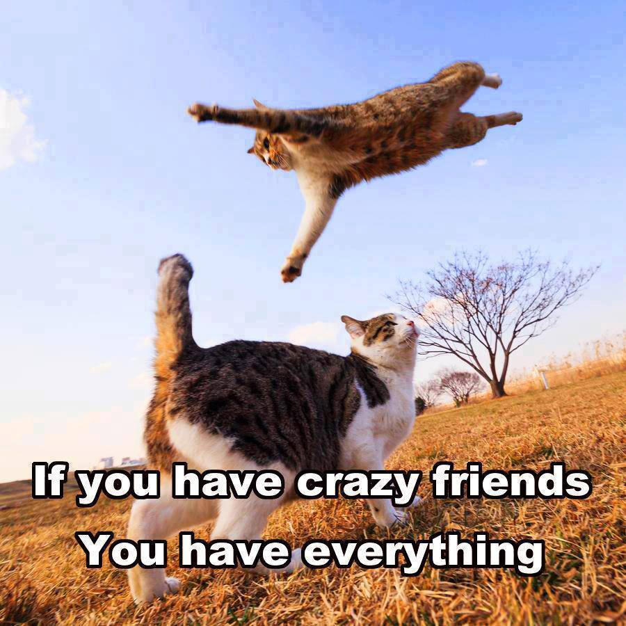 Funny-cats-Crazy-friends