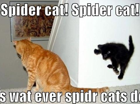 Spider-Cat-Funny-Cats-picture