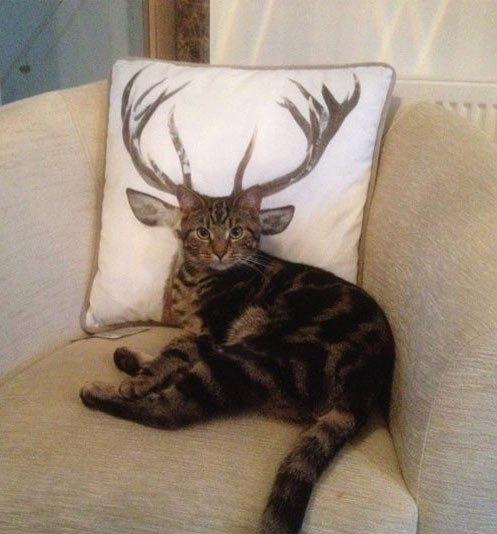 funny-cat-with-deer-horns-
