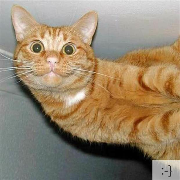 funny-cats-1